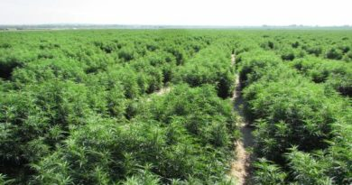 Hemp Licenses Oregon