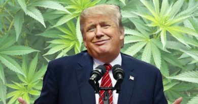 Marijuana recreational victories, medical marijuana initiatives, 2016, win, election, Trump