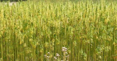 Industrial Hemp,Canada,Rules Revised,Hemp,Canada