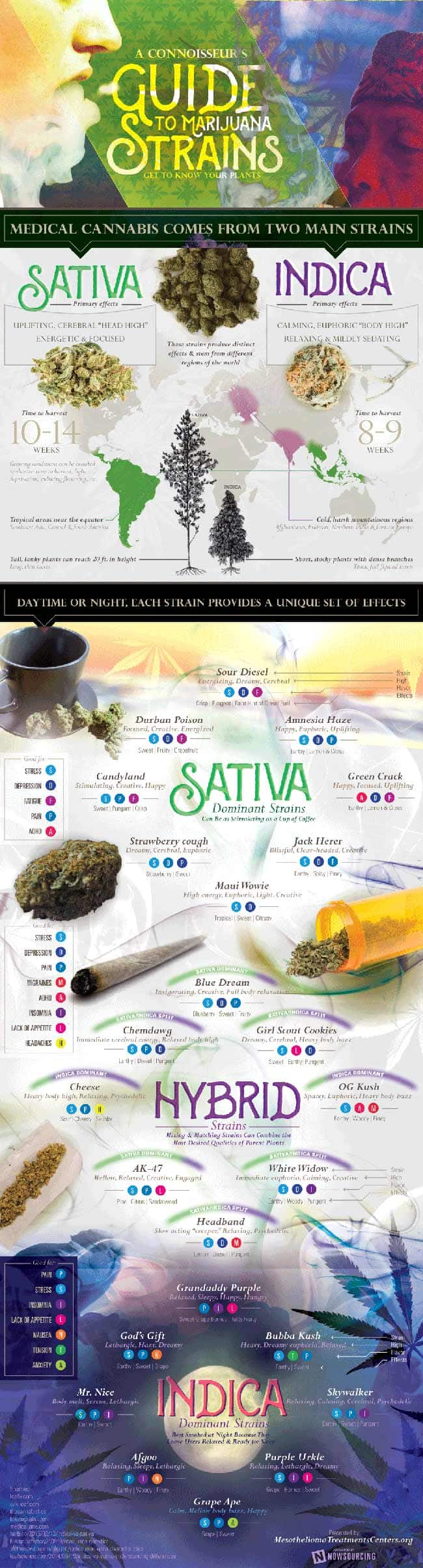 Strain,Indica,Sativa,difference,cannabinoids,indica vs sativa,infographic