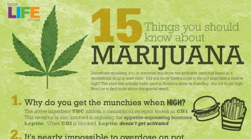 Things to know about marijuana,infographic,cannabis,marijuana,munchies,truuth serum,coffee,legal countries,cigarettes