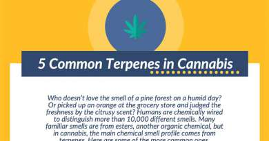 Terpenes,common,infographic