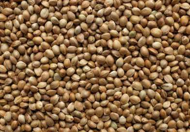 Certified Seed Market: 'Uncertain, Goofy, Chaotic'