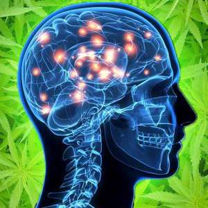 cannabis and alzheimers