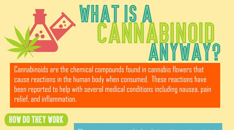 What is a Cannabinoid: Infographic