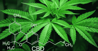 The Importance of Quality CBD